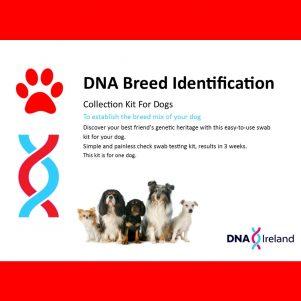 Canine Breed ID large web image